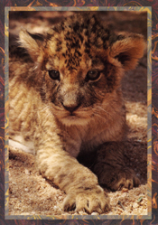 William Holden Wildlife Foundation Greeting Cards